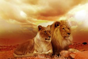 What does it mean to be a Lioness